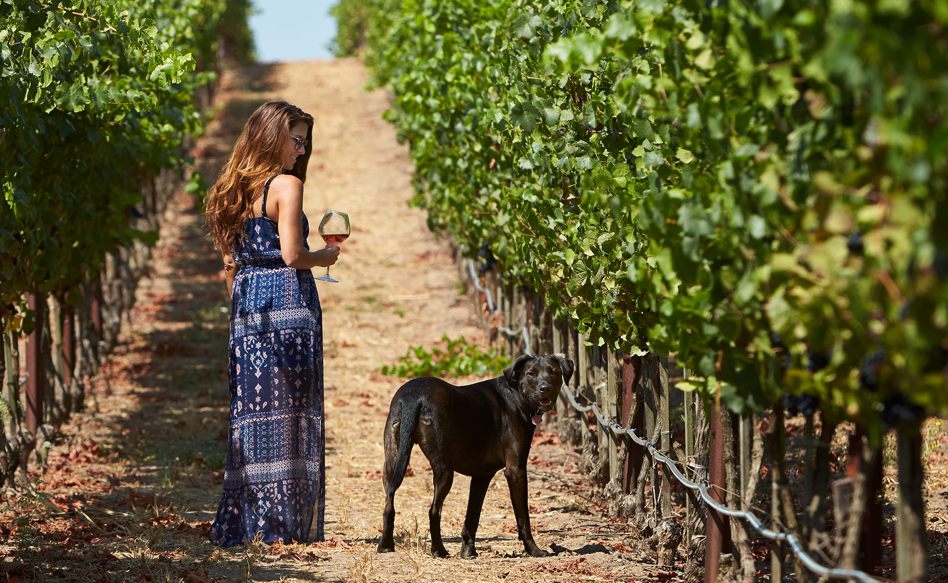 Bouchaine Winery Vineyards Napa valley  Lifestyle,  Photography by Brandon McGanty.  The Dogs of wine