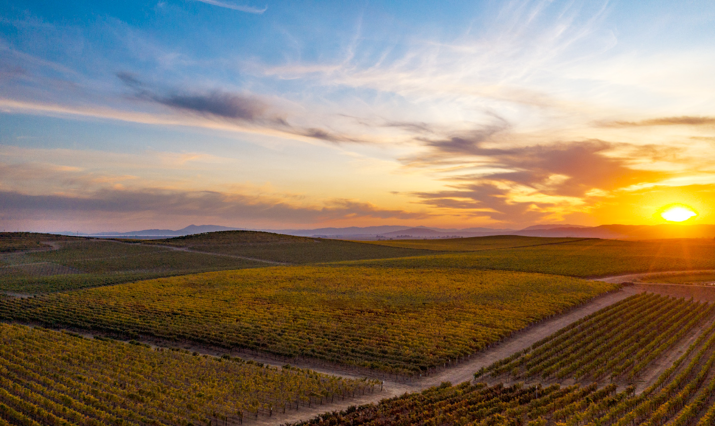 Carneros-Valley-Bouchaine-Vineyards-Drone